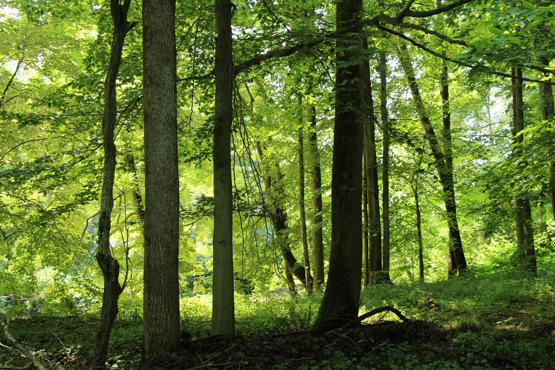 The preserve boasts a high diversity of mature trees, credit for whose protection goes to the Sellers who for multiple generations safeguarded their trees.