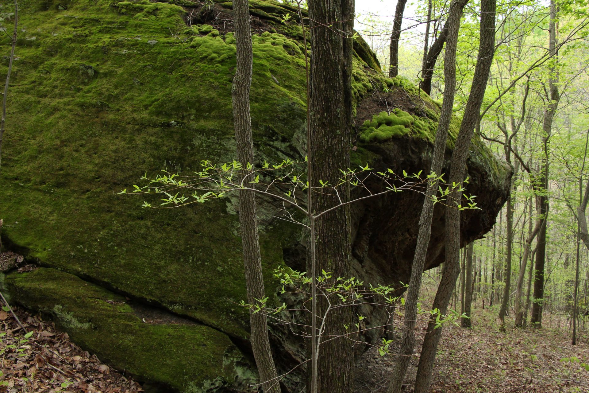 Beautiful moss covered outcropping at Ohio Hanging Rock