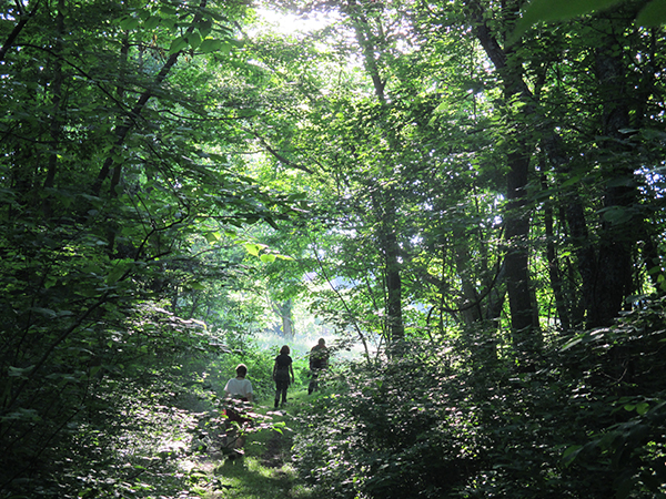 Hiking the Glen at Ridgeview Farm by Artemis Eyster