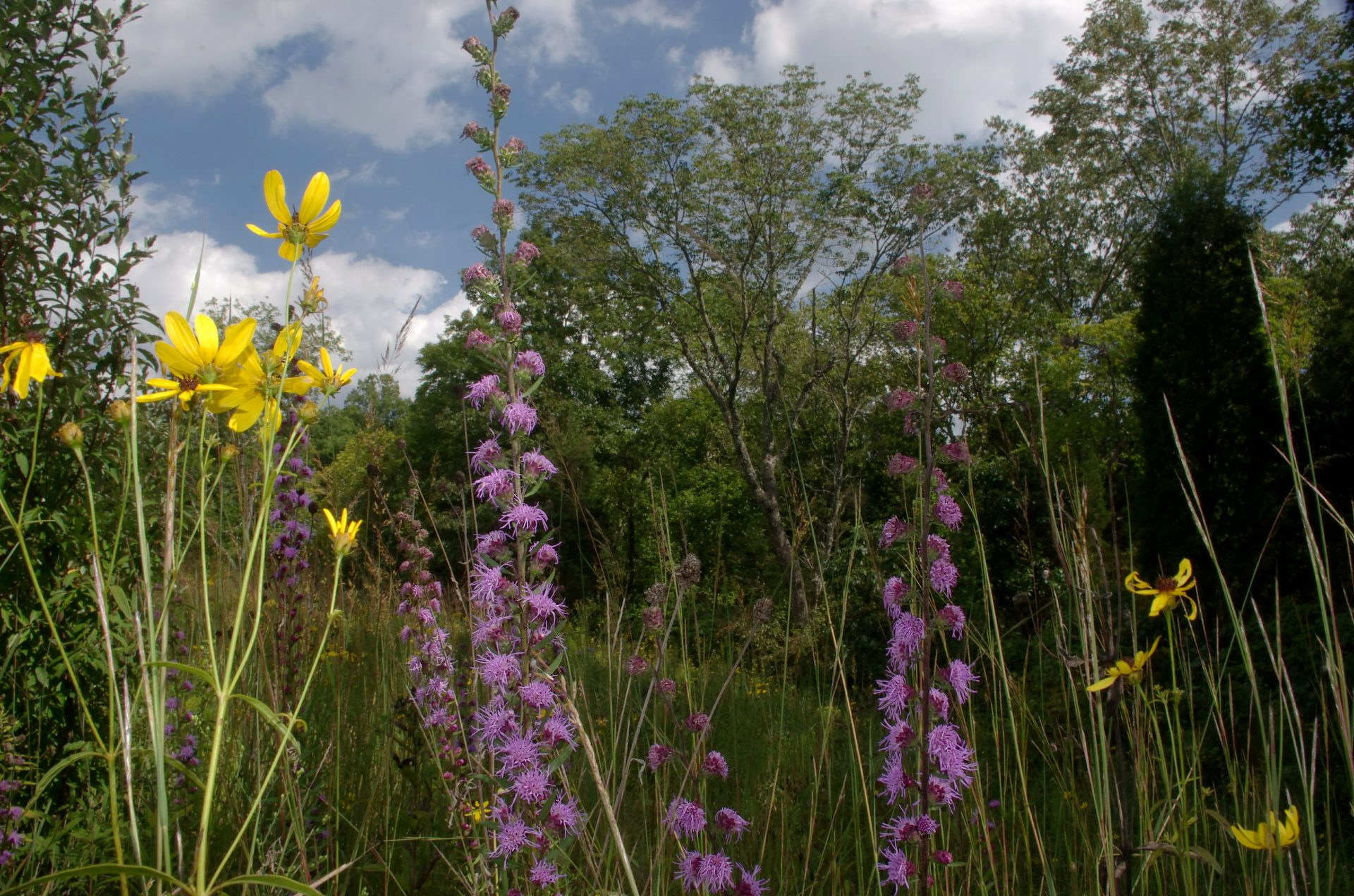 Colorful displays of showy wildflowers make Ka-ma-ma Prairie a treasured spring destination for nature lovers.