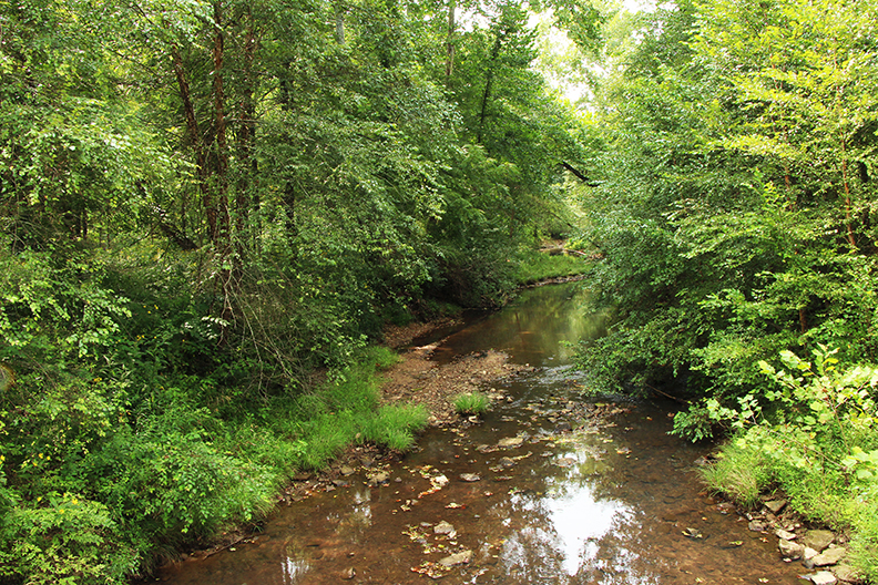 The Red Rock Bluffs tract drains into Queer Creek, a creek large enough to have a functioning floodplain.
