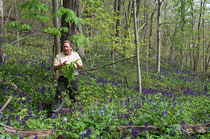 Naturalist Dave Kuehner interprets the spring wildflower display at the Bluffs