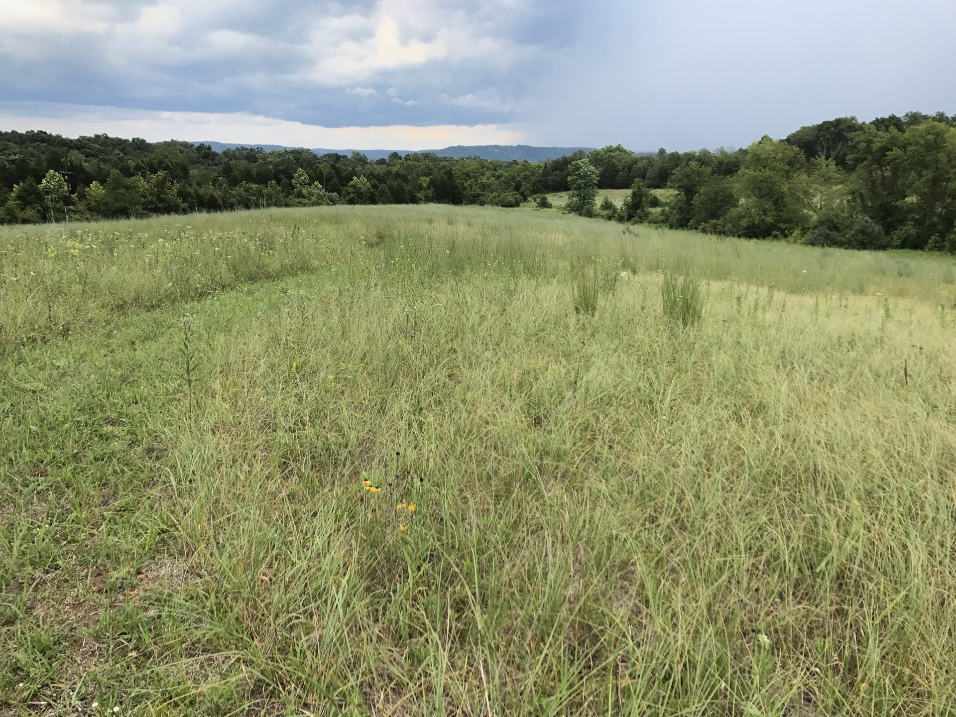 Plum Run Prairie is one of only three remaining sites where you can find the Plantago cordata, or heart-leaved plantain, an extremely endangered plant.
