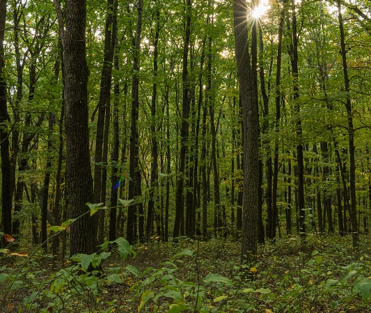 Tobacco Barn Hollow forest, photo by Lewis Ulman